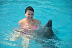 Dolphin Show in Sharm El Sheikh