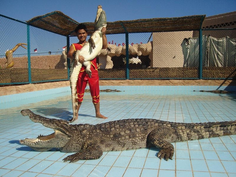 crocodile and snakes show in Sharm El Sheikh