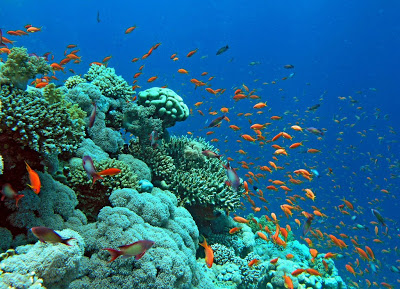 Read sea excursions and boat trips from sharm el sheikh